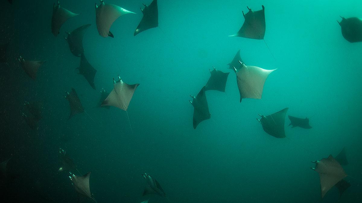 jujairah-diving